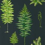 Botanico Verde / Carbone